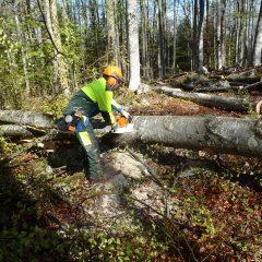 Analiza delovanja strojnega krožka Gorjan kot oblike medsosedske pomoči lastnikov gozdov