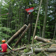 Izvajanje gozdarskih del v zasebnih gozdovih